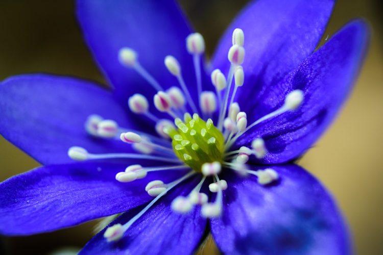 Цветята - те са толкова красиви!
